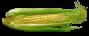 corn-667678